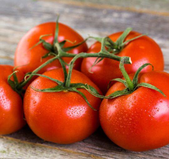 tomatesvigne