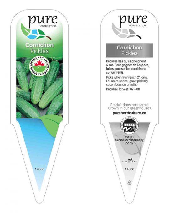 plant-cornichon