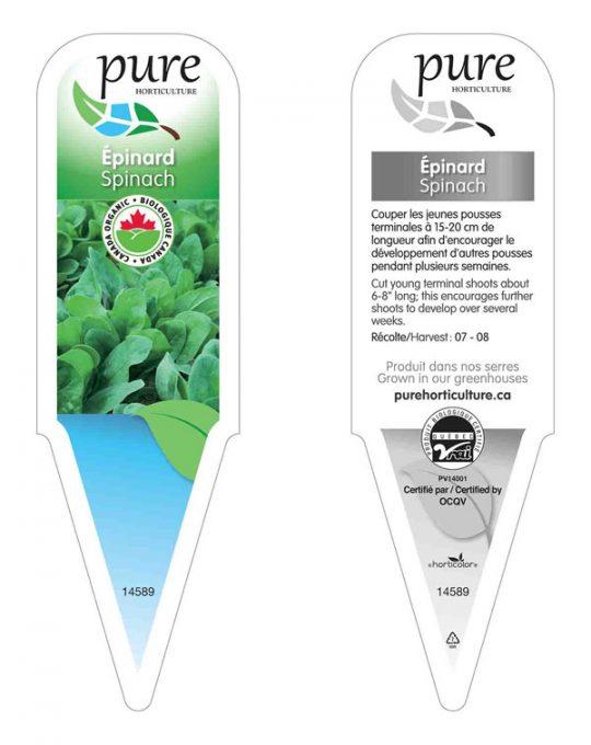 plant-epinard