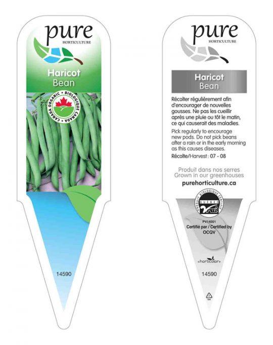 plant-haricot