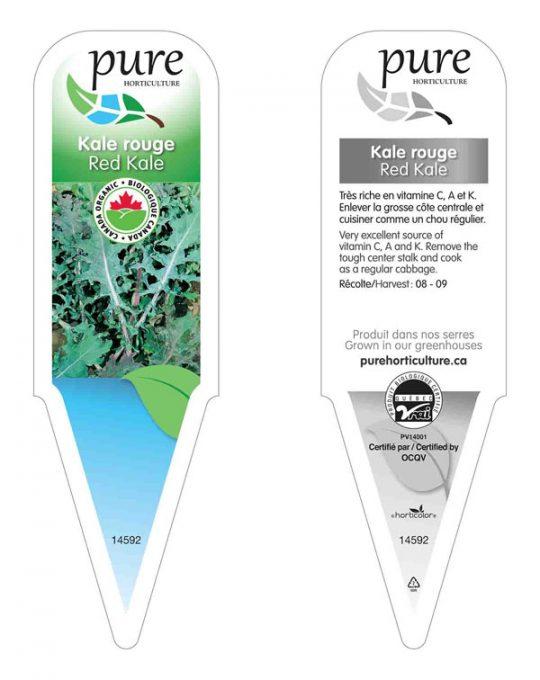 plant-kale-rouge