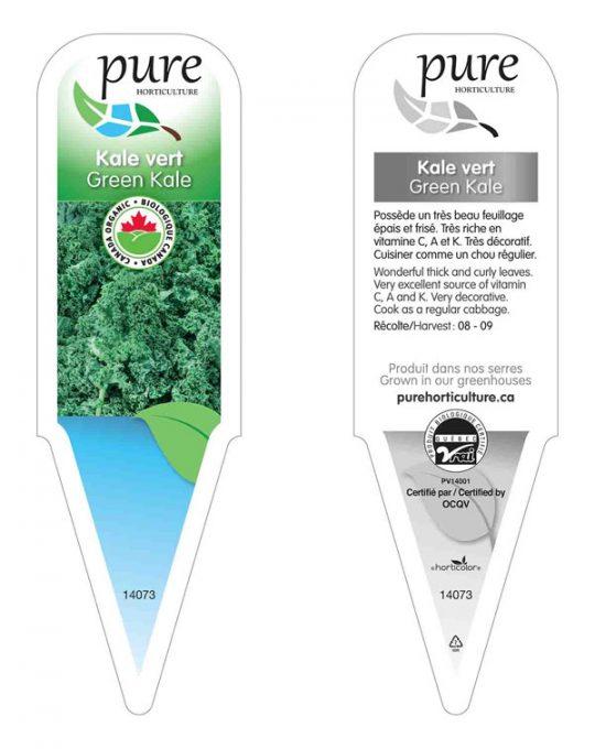plant-kale-vert