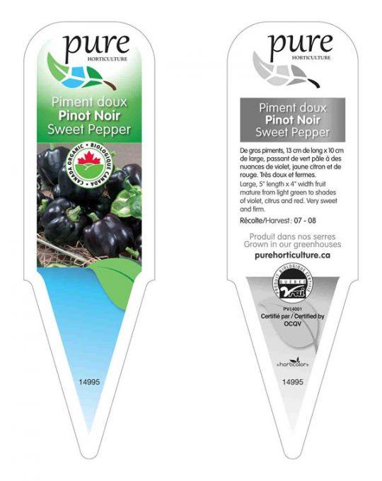 plant-piment-doux-pinot-noir