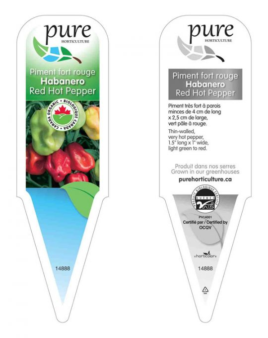 plant-piment-fort-habanero