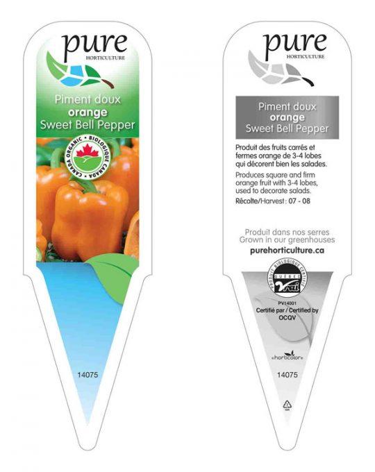 plant-piment-orange