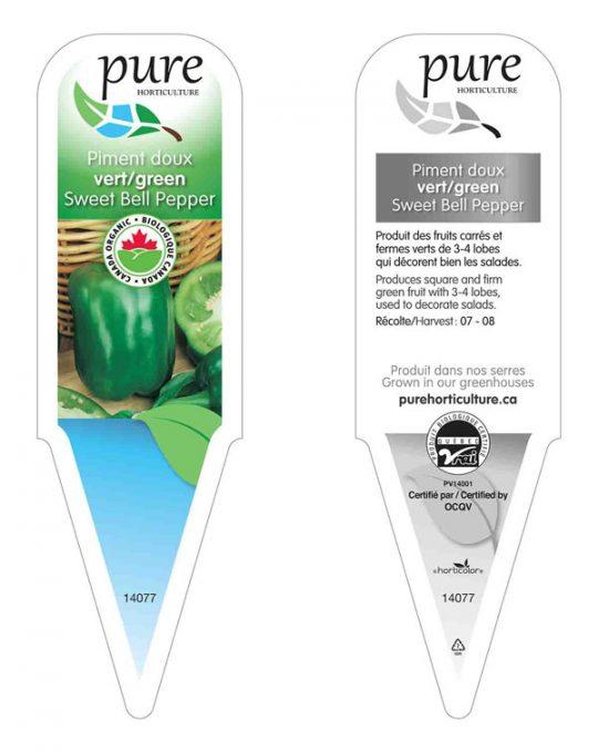 plant-piment-vert