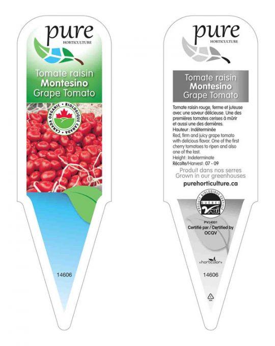 plant-tomate-raisin
