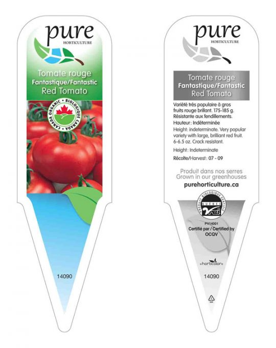 plant-tomates-rouges-fantastiques